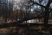 4th Jan 2019 - forest landscape