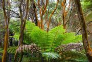 5th Jan 2019 - Sulphur intoxicated tree trunks