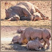 5th Jan 2019 -  Rhino Moms