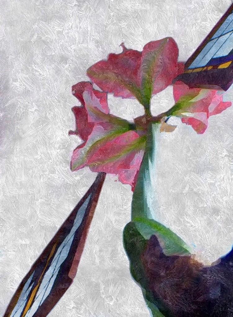 Amaryllis  by jacqbb