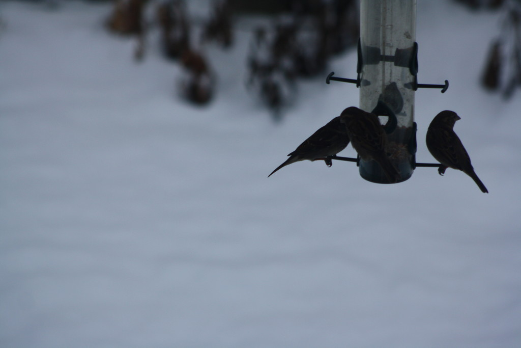 Early morning birds on the feeder by bruni