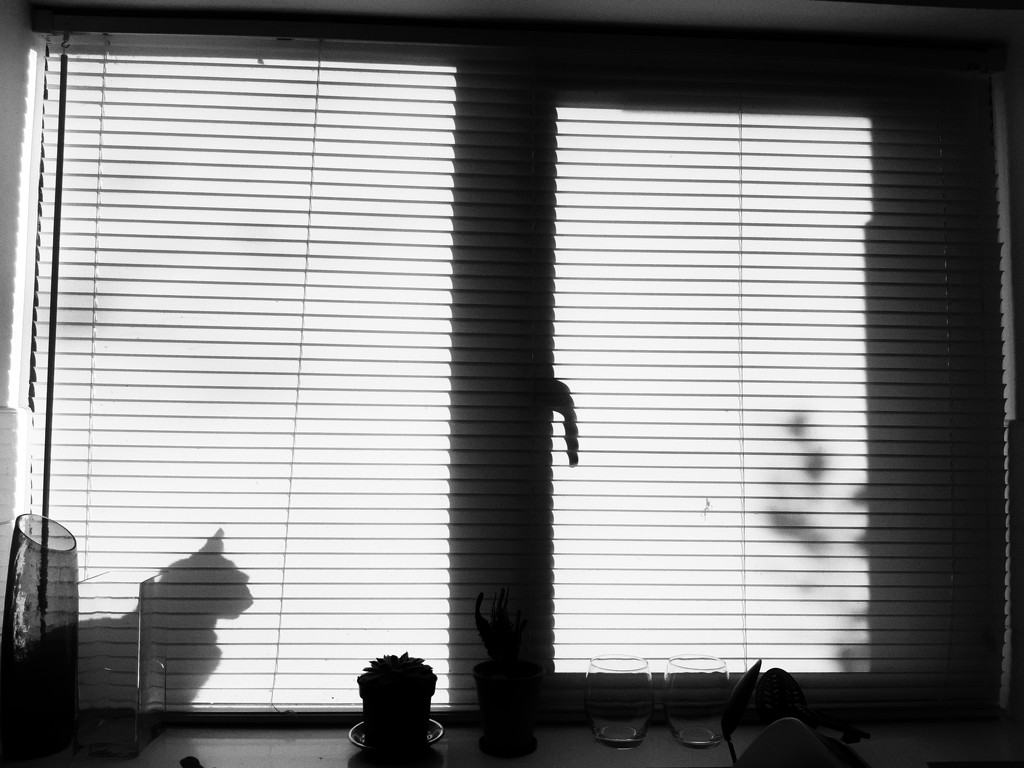 Windowsill visitor by m2016