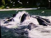 6th Jan 2019 - Dreaming of Alaskan whales