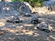 4th Jan 2019 - Turtles meeting.