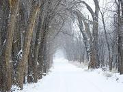 6th Jan 2019 - Winter Trees