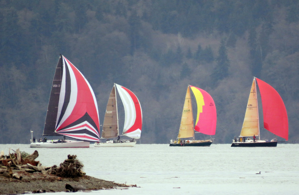 Sailboat Race On Puget Sound by seattlite