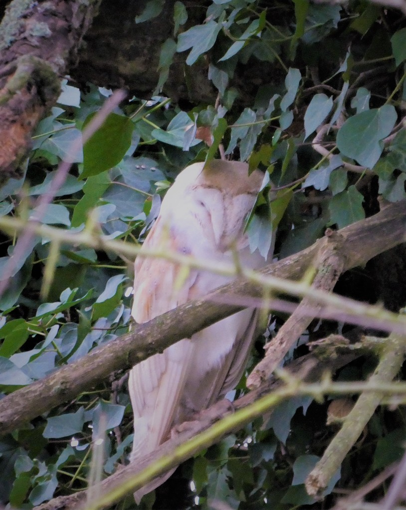 In an old apple tree today by flowerfairyann
