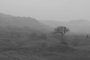 6th Jan 2019 - mist