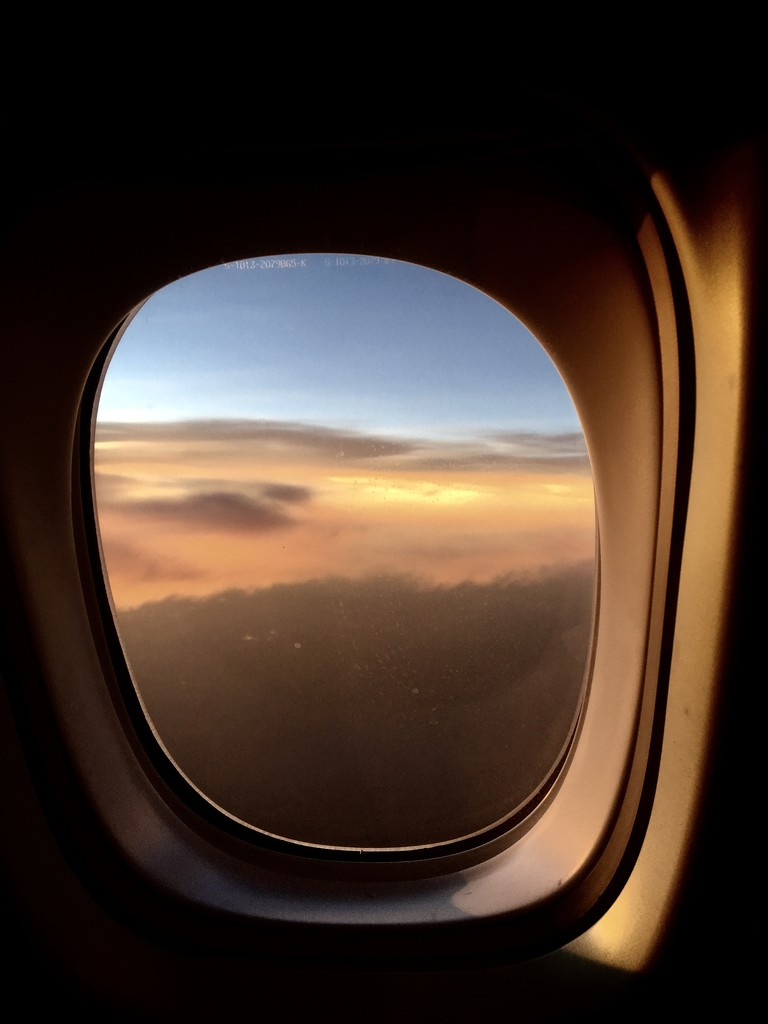 Evening flight by vincent24