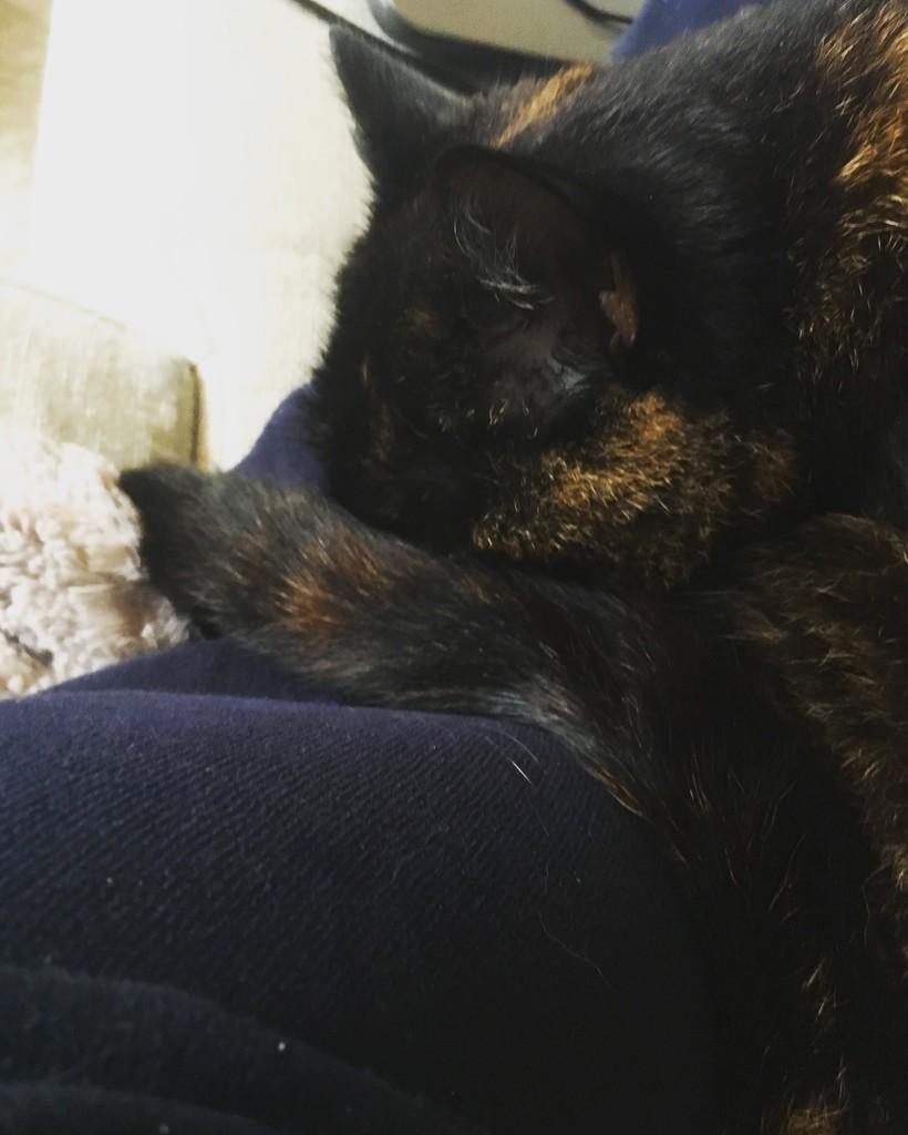 Sleepy Cat by naomi