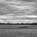 January Fields