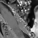 B&W Challenge (tag bw-37) - Droplets/Bubbles by gigiflower