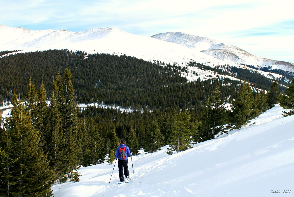 Snowshoeing by harbie