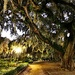 Live oak and illuminated Spanish moss, Hampton Park by congaree