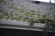 6th Jan 2019 - Roof Branch