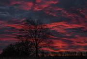 6th Jan 2019 - Winter Sky Oasis