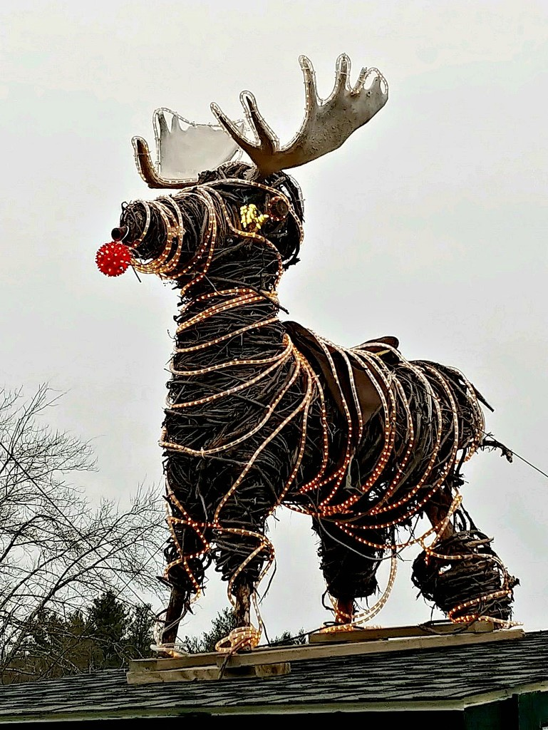 Santa's Forgotten Reindeer?  by jo38