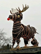 7th Jan 2019 - Santa's Forgotten Reindeer?