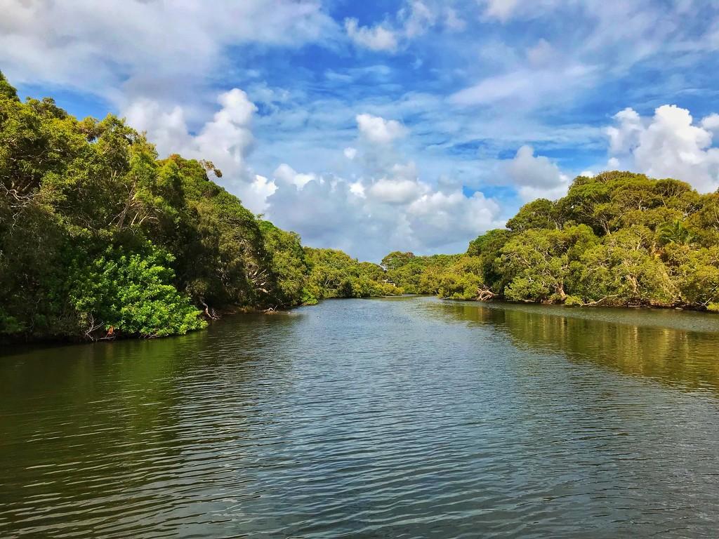 Tooway Creek by corymbia