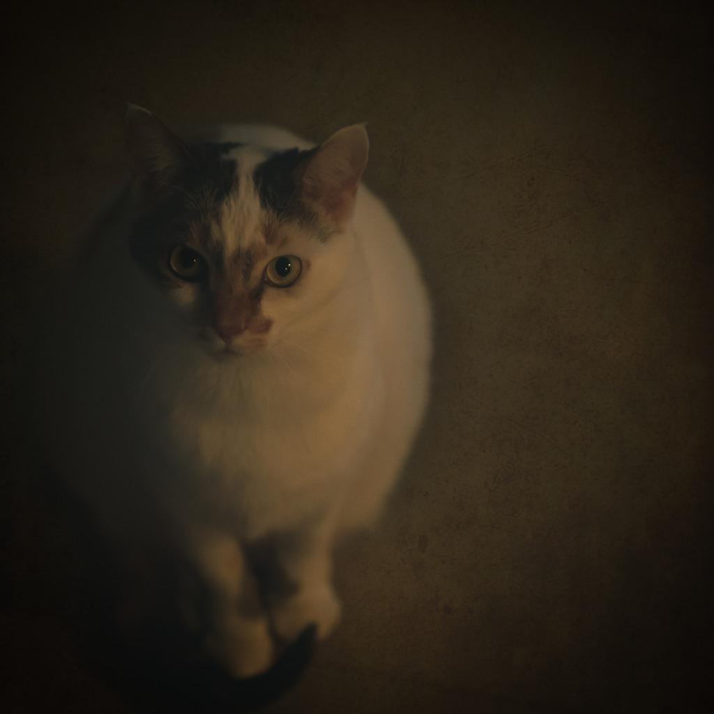 fine art cat??? by jackies365