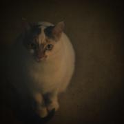 7th Jan 2019 - fine art cat???