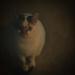 fine art cat???
