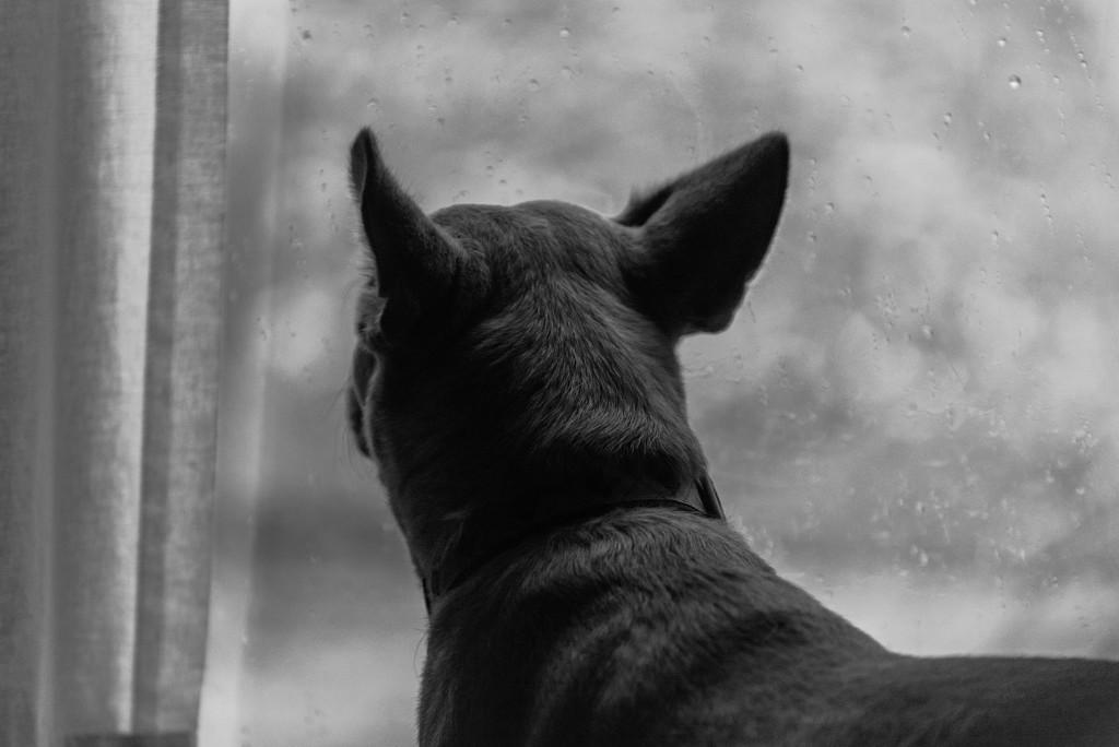rainy day dog by jackies365