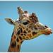 Jerry Giraffe..