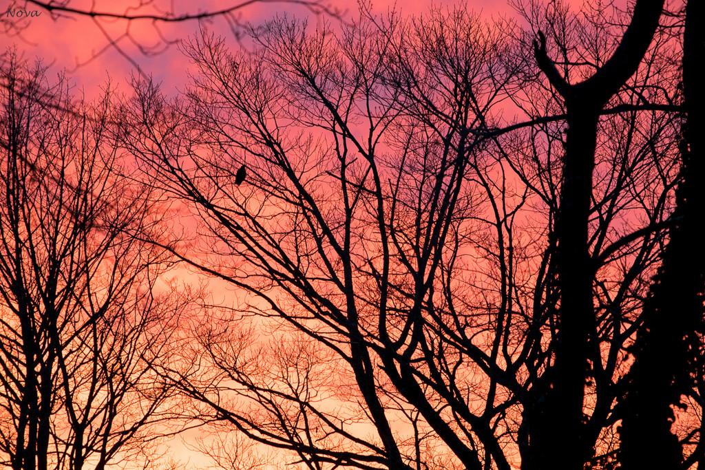 Sunrise by novab