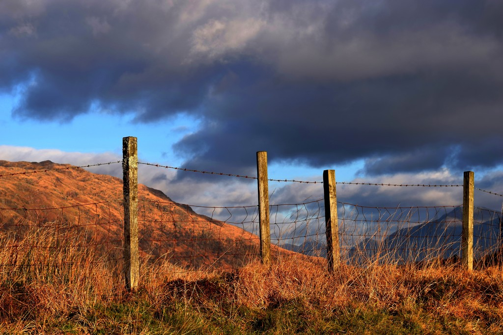 fence by christophercox