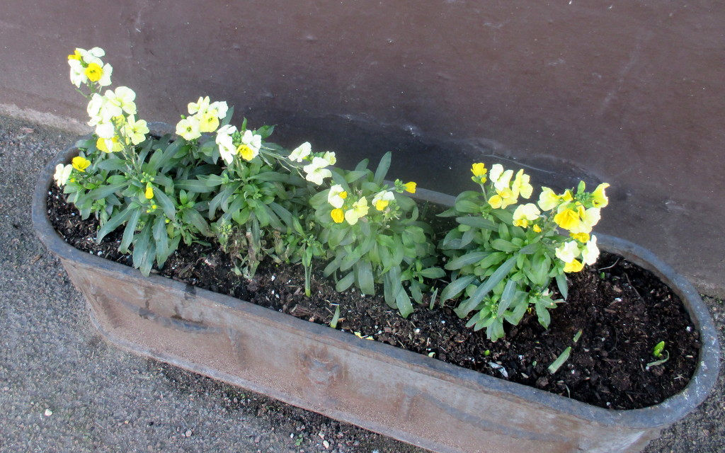 Wallflowers by g3xbm