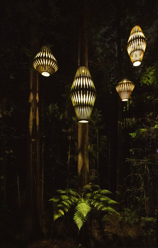 lights in the jungle by shepherdmanswife