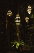 8th Jan 2019 - lights in the jungle