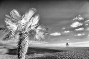 8th Jan 2019 - Palm Edged Beach