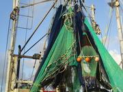 10th Jan 2019 - fishing fleet Series