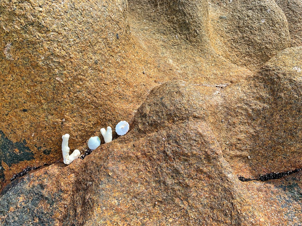 Love in Seychelles. by cocobella