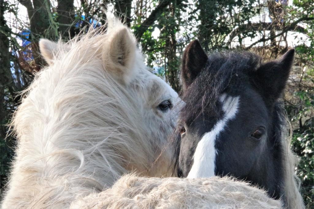 Yada Yada Yada (or Horse Whispering) by 30pics4jackiesdiamond