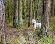 9th Jan 2019 - George in the woods