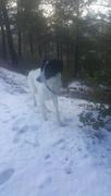 8th Jan 2019 - Zeki in Snow