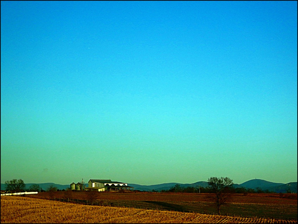 Virginia Farm in the Golden Hour by olivetreeann