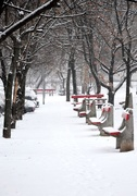 8th Jan 2019 - Empty promenade with snow the and red benches
