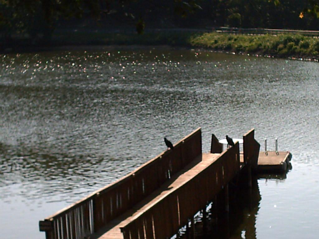 Birds on dock of the lake by sfeldphotos