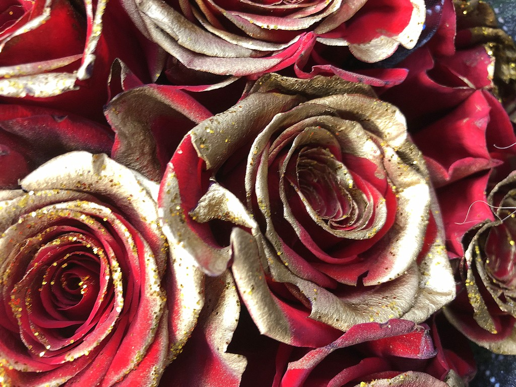 Gold roses by homeschoolmom