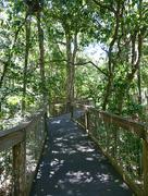 6th Jan 2019 - Sea Acres Rainforest Centre -  Port Macquarie