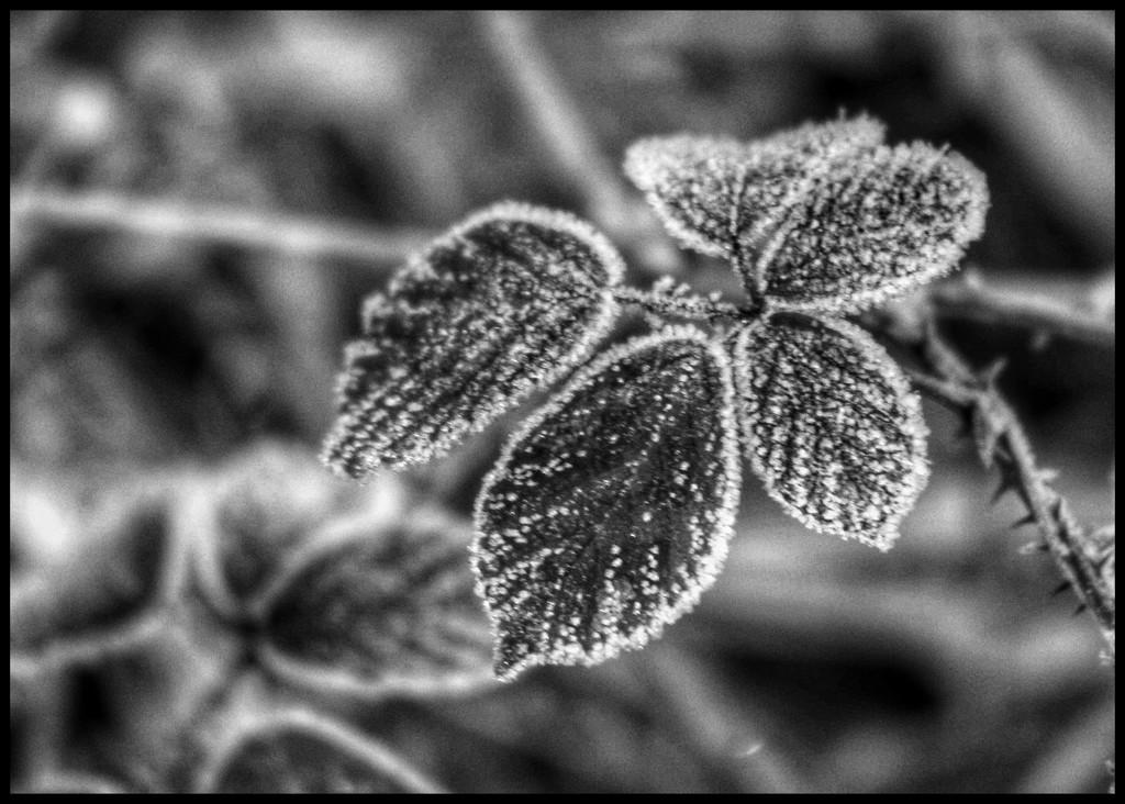 Frosty! by lyndamcg