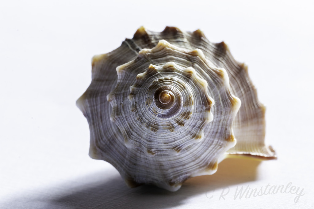 Natural Spiral by kipper1951