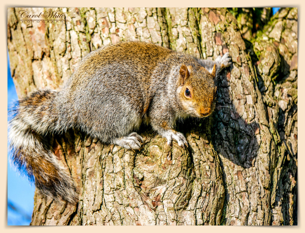 """""""Do You Have Any Nuts For Me?"""" by carolmw"""