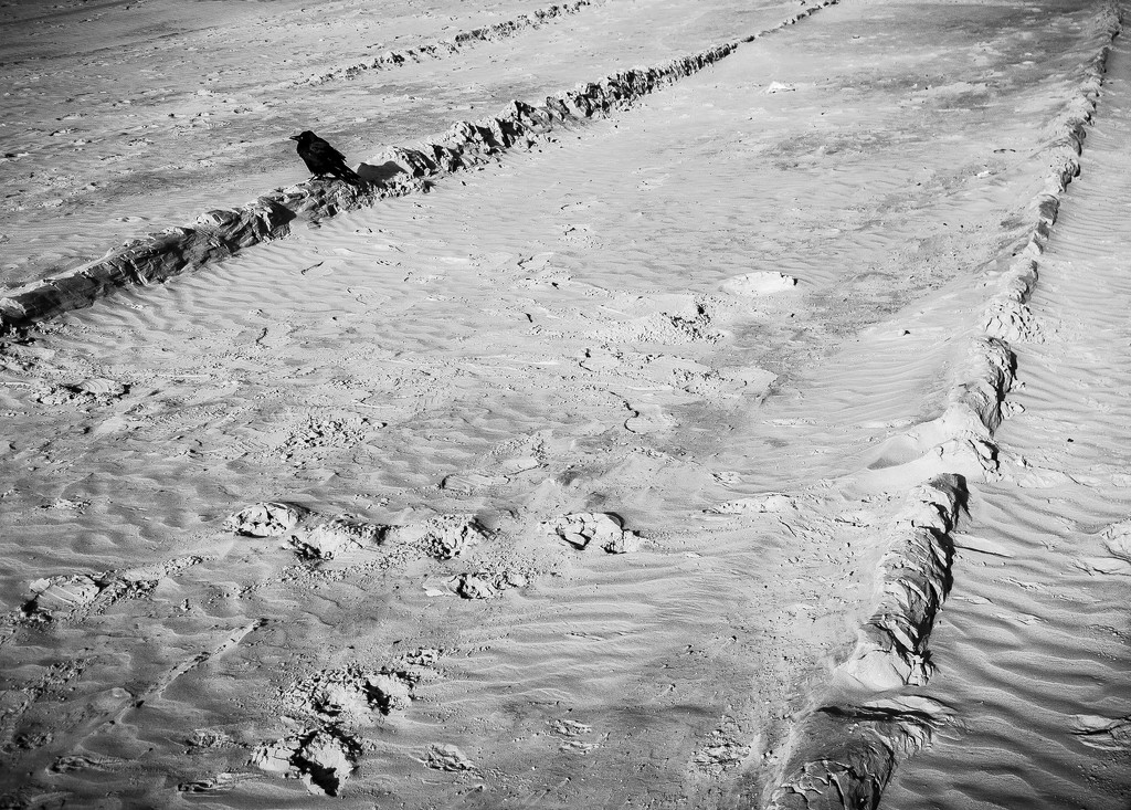 Tracks and the Crow by dorsethelen