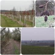 10th Jan 2019 - Walking near Grafham