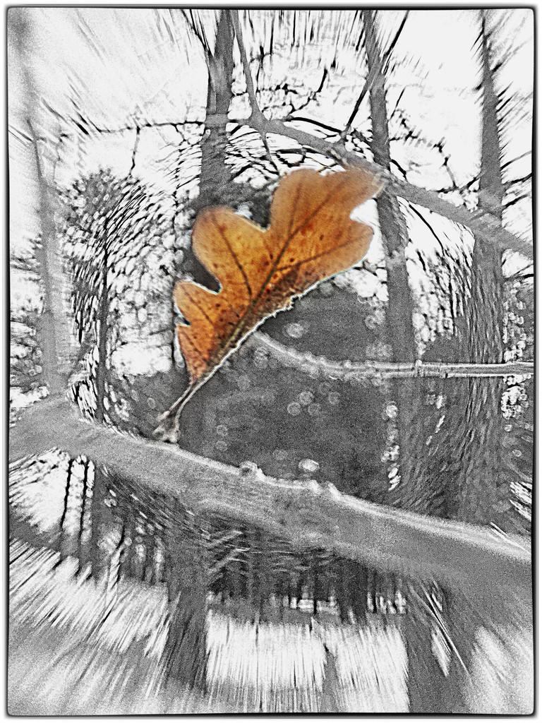 Falling Leaf by joysabin